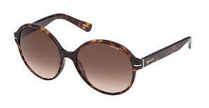Police S1967 0722 BROWN GRADIENTSHINY DARK HAVANA